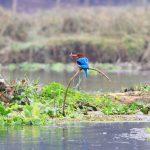 bird-watching-in-chitwan-national-park